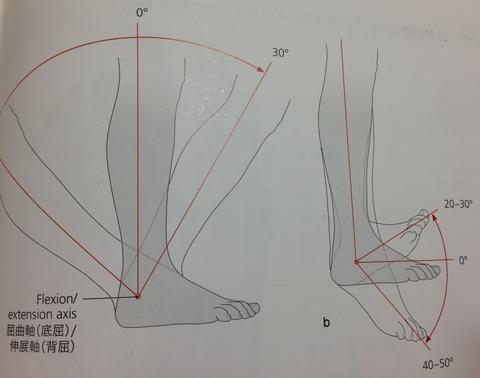 001137 - 【百本コラム】七本目:『足部の運動連鎖トリガー応用編』