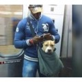 160 85 120x120 - 大型犬は約30キロ!? NYのマッチョガイは大型犬をバッグに入れて電車移動している