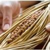 160296 100x100 - 【特別コラム:発酵番長さん】筋肉を効率的に作ることができる発酵食品のメカニズムとは?
