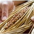 160296 120x120 - 【特別コラム:発酵番長さん】筋肉を効率的に作ることができる発酵食品のメカニズムとは?