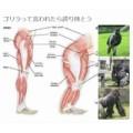 160470 120x120 - 「ゴリラ」と言われたら誇り持とう!握力・背筋力 400kgオーバー、ゴリラの凄まじい身体能力が話題に